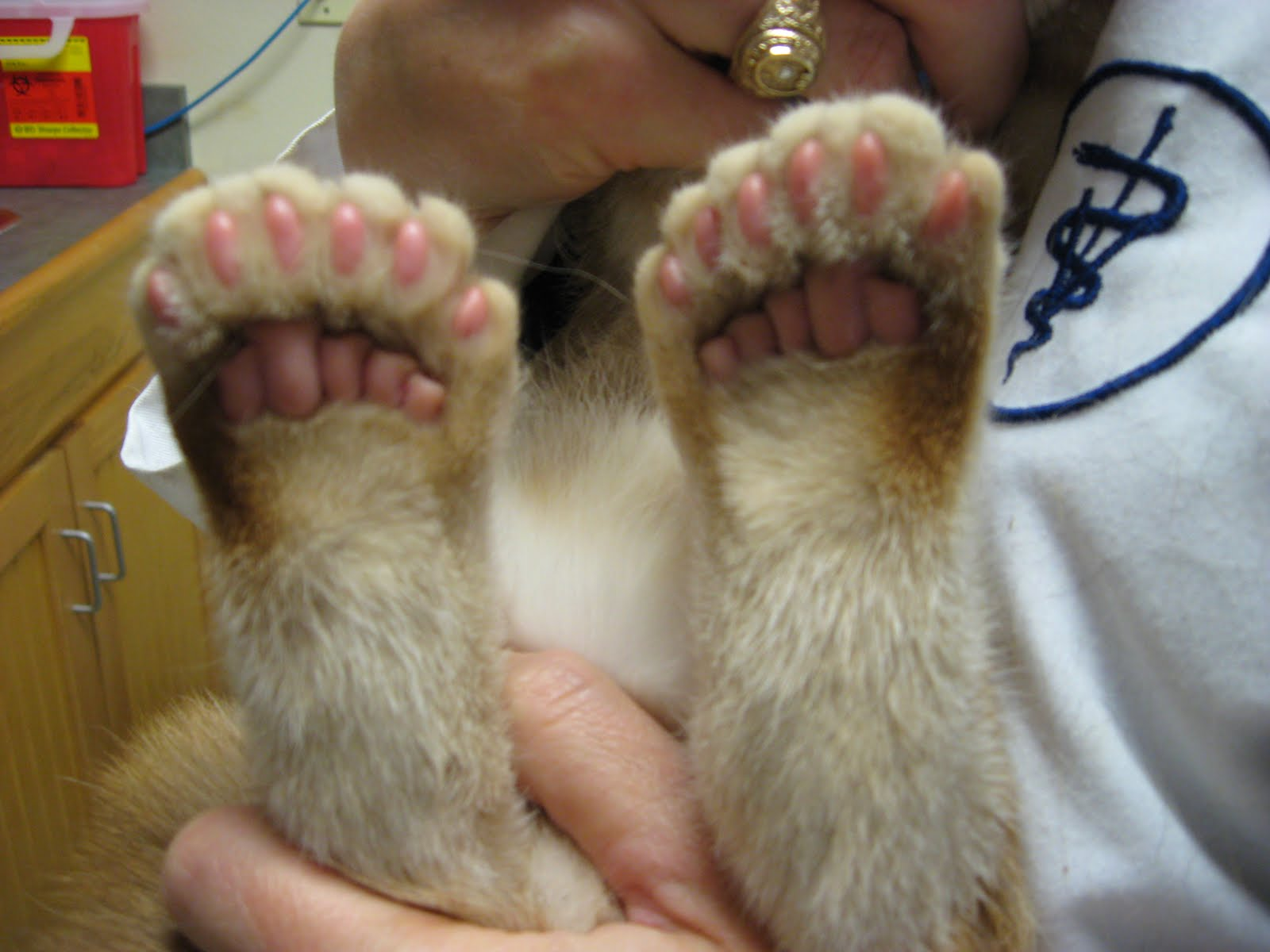 Can Polydactyl Cats Use Their Thumbs