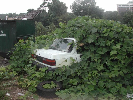 kudzu-car-large