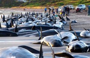 whales_1358200c