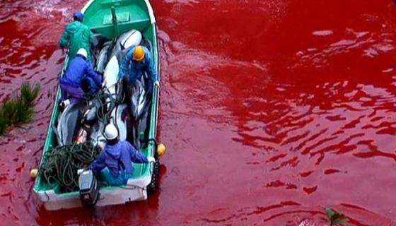 BoE_BP4_DolphinSlaughter