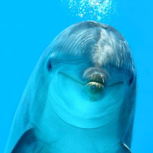 top_dolphin_facts_2