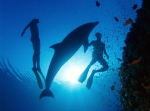 Deep_Sea_3D_-_Dolphin_Discovery