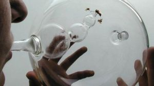 ht_cancer_detecting_bees_sr_131125_16x9_608