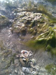 Indian Beach Sealife