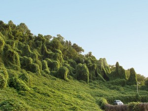 """Kudzu"" by Katie Ashdown, via flickr"
