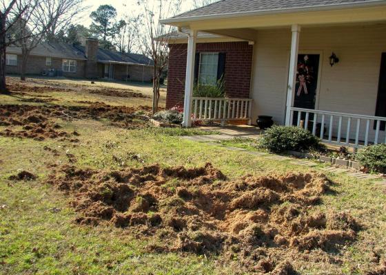 (Photo: Billy Higginbotham, Texas AgriLife Extension Service, Bugwood.org)