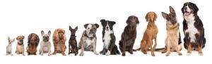 dog-lineup3-818x249