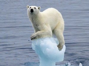 polar-bear-clinging-onto-cracking-ice