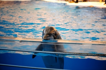 captive_dolphin