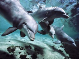 dolphinss