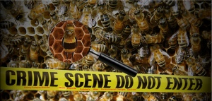 Honey_Bees_&_Chemtrails_image023