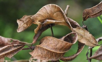 camouflage-lizard-and-leaf