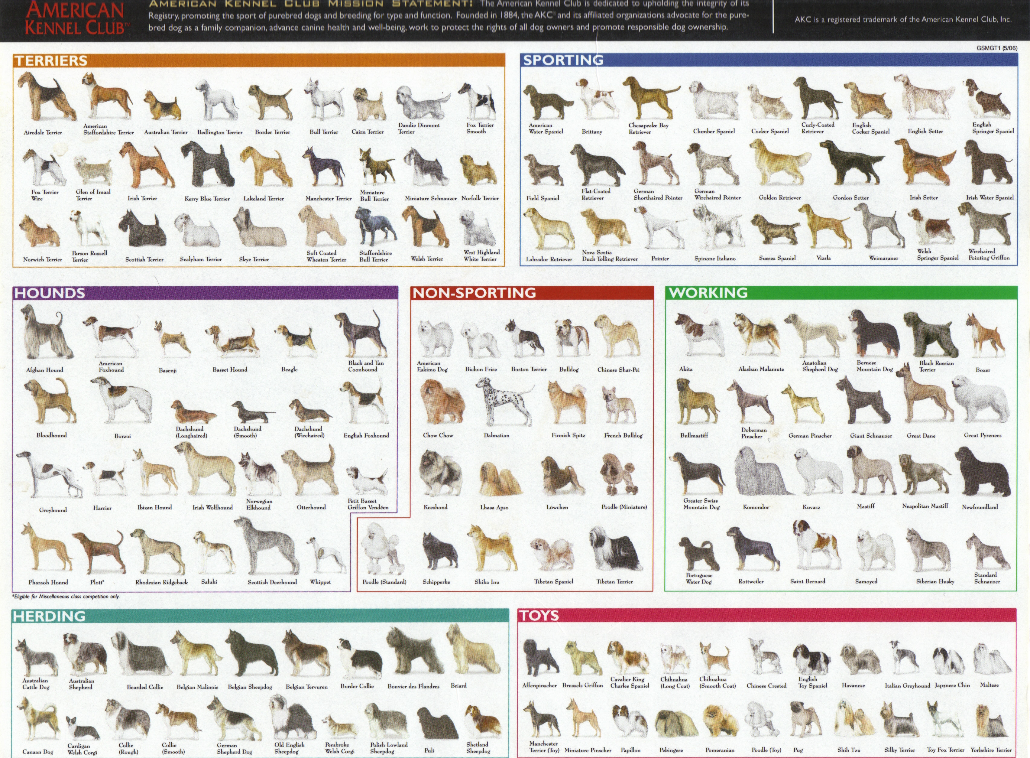 Dogs bioventures dog breed chart nvjuhfo Images