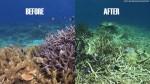 140619115135-great-barrier-reef-split-image-story-top