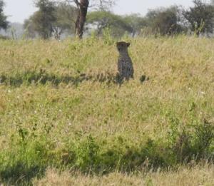 Serengeti National Park-  Lamai Triangle Photo by Irene Rofail
