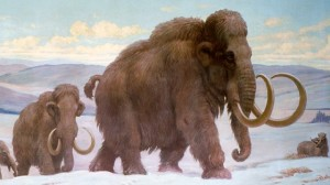 woolly-mammoth-skeleton-sold-for-300000