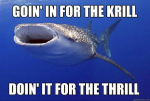 Whale-Shark-Goin-In-For-The-Krill