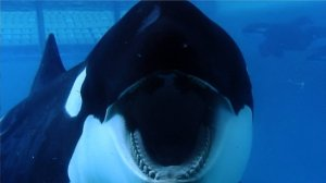 Blackfish_Dogwoof_Documentary_7_800_450_85